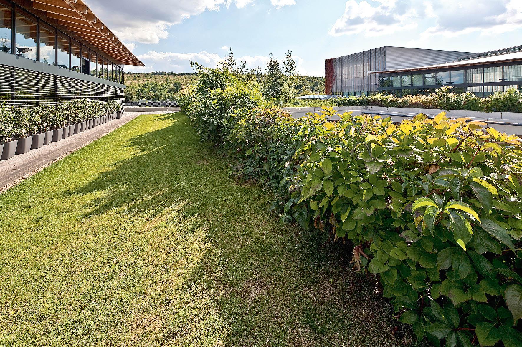 Zelené střechy jsou trendem ekologických staveb současnosti. Často slouží jako pobytový prostor smožností relaxace.