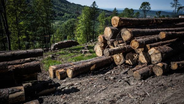 Lesy vyžadují pomoc okamžitě - Ilustrační foto.