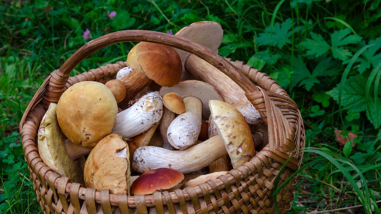 Vevětšině západoevropských zemí si zlesa houbař může odnést jen omezené množství hub.