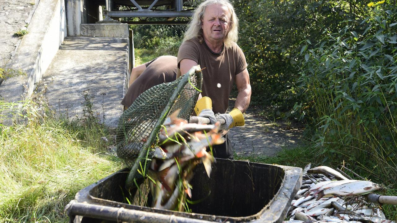 Řeka Bečva, ekologická katastrofa, mrtvé ryby