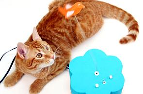 I kočka už píše na Twitter. Domácímu mazlíčkovi pomáhá důmyslná hračka