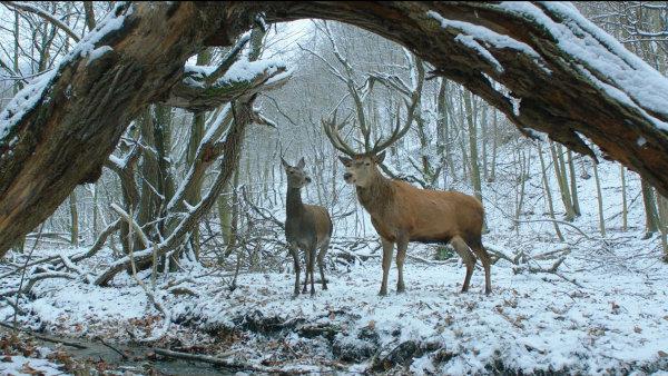 V maďarštině se film jmenuje A Teströl és Lélekröl, pro anglickojazyčné festivaly On Body and Soul.