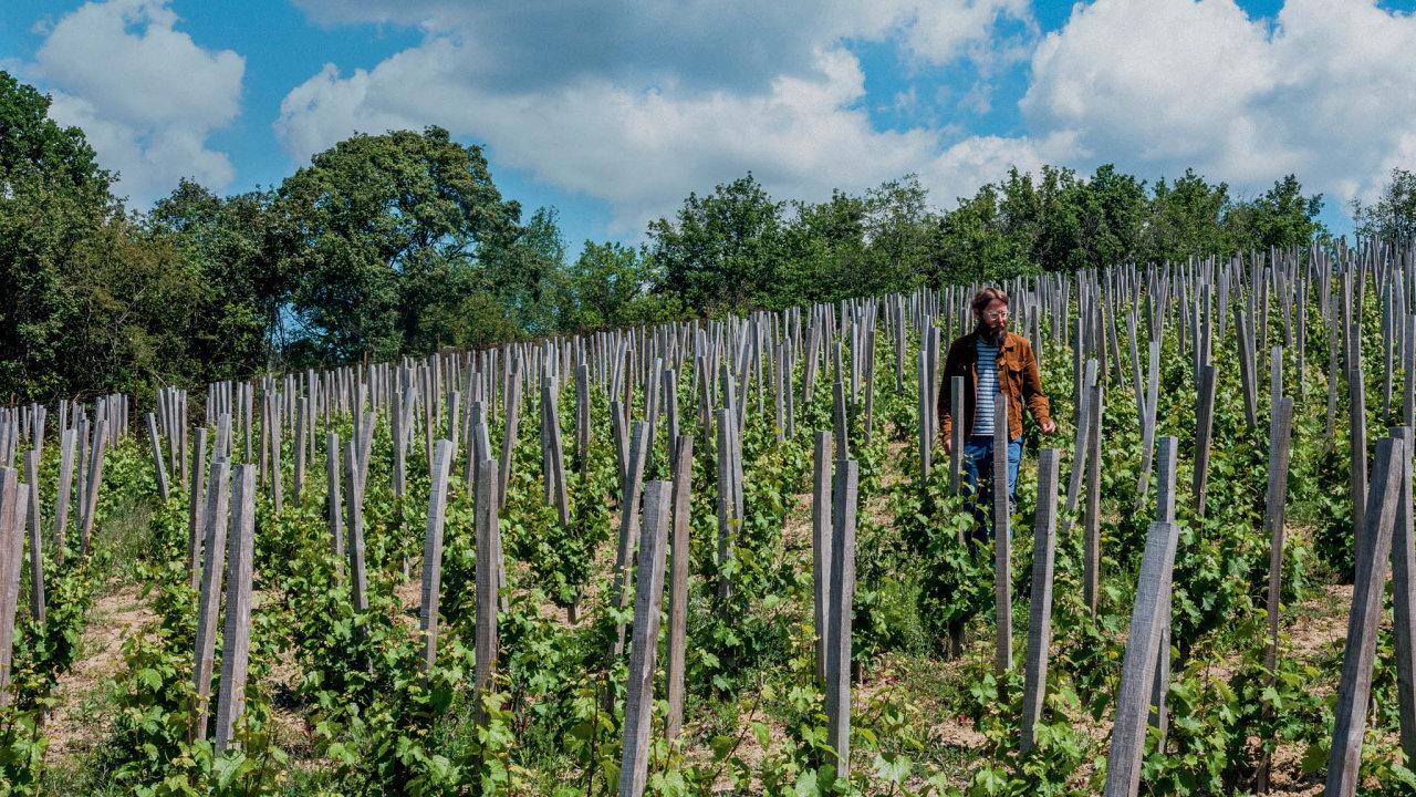 Autentičtí vinaři jsou navíc naši nejúspěšnější vinaři vzahraničí, ojejich vína je venku zájem.