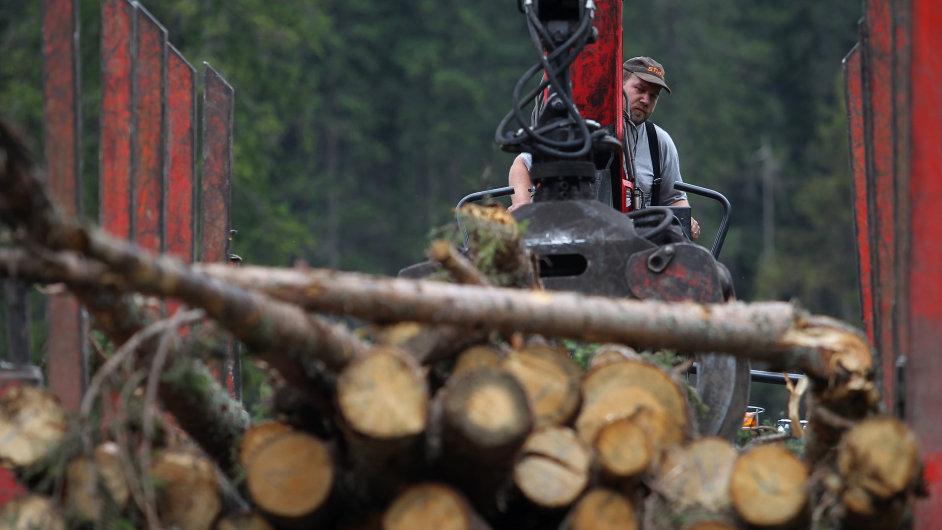 Šumavské stromy ničí kůrovec. Dřevorubci se dali do kácení navzdory protestům ekologických aktivistů.