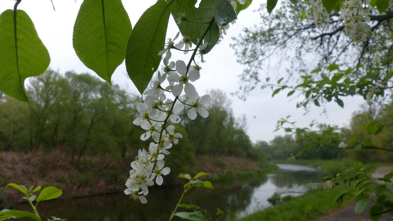 Lužní les V Lyngu: Území leží kolem řeky Olše na česko-polské hranici.