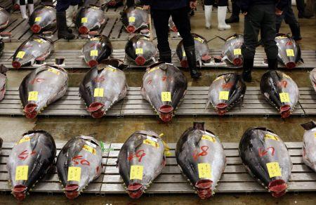 Ryby připravené v Tokiu k novoroční aukci