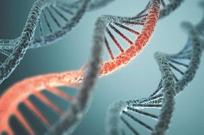 Geny mohou přeskakovat mezi druhy. S ostatními živočichy tak sdílíme víc, než si myslíme