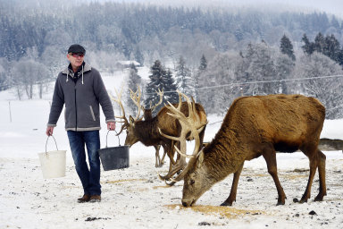 Farmář chová na Šumavě jeleny, daňky i skot. Jeho vyzrálé hovězí si oblíbili hlavně němečtí restauratéři