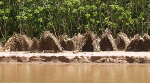 Obydl� domorod�ho kmene Mashco Piro