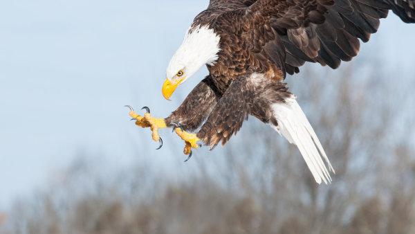 Nizozemská policie se rozhodla v boji proti dronům použít speciálně vycvičené dravé ptáky - Ilustrační foto.