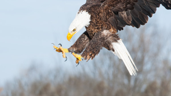 Nizozemsk� policie se rozhodla v boji proti dron�m pou��t speci�ln� vycvi�en� drav� pt�ky - Ilustra�n� foto.