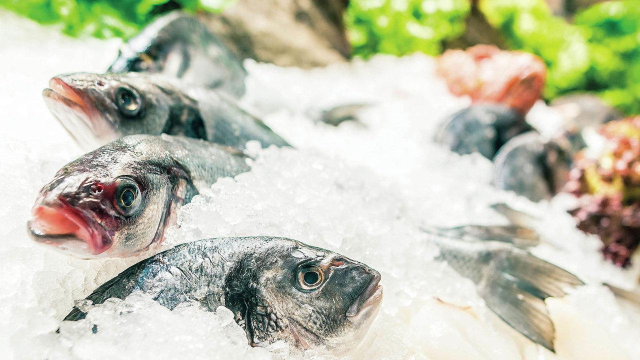 Čerstvé ryby z Evropy se do České republiky dostanou do 48 hodin od výlovu. Ze zbytku světa je díky letecké přepravě dovoz jen o pár hodin delší.