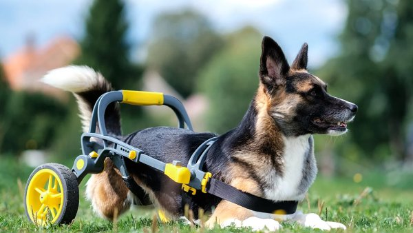 Unikátní invalidní vozík pro psy a kočky vzniká na 3D tiskárnách.