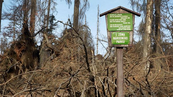 První zóna Národního parku Šumava.