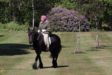 Královna Alžběta na koních pravidelně jezdí i ve svých 94 letech.