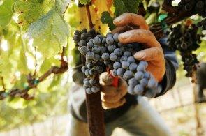 Francouzi přiživují vinařský boom v Číně, rozhlížejí se tam po nových vinicích