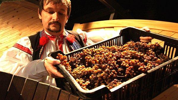 Výroba slámového vína v Lechovicích