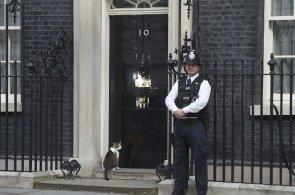 Cameron a s n�m i 330 krabic opou�t� Downing Street. Vl�dn� chyta� my�� Larry ale z�st�v�