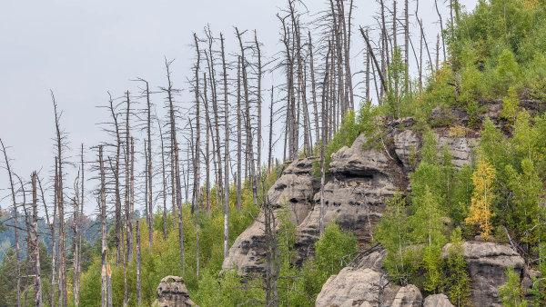 Od začátku léta zasahovali čeští hasiči u dvojnásobku lesních požárů oproti loňsku. Za opékání špekáčků v přírodě hrozí pokuta až pět tisíc
