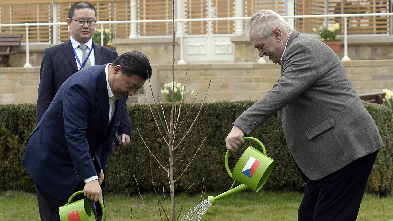 Česko-čínské přátelství: Symbolicky zasazený strom prezidentem Milošem Zemanem a jeho čínským protějškem Si Ťin-pchingem před čtyřmi roky předznamenal obchody obou zemí se dřevem.