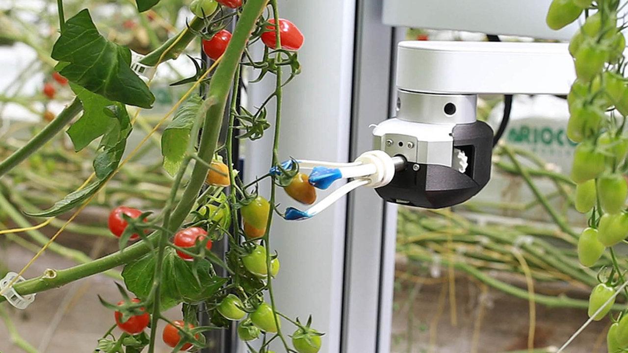 Vím, co ajak utrhnout. Robot Virgo umí vybírat dostatečně zralé plody aodhadne ito, jakou sílu může vyvinout, aby je při sběru nerozmáčkl.