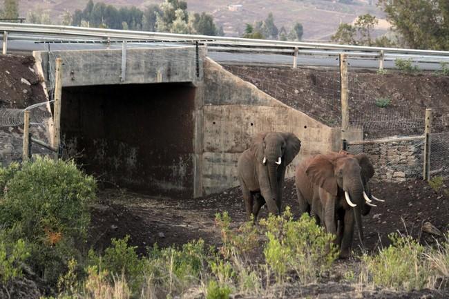 Keňa, sloni, zvířata, podchod, doprava, příroda