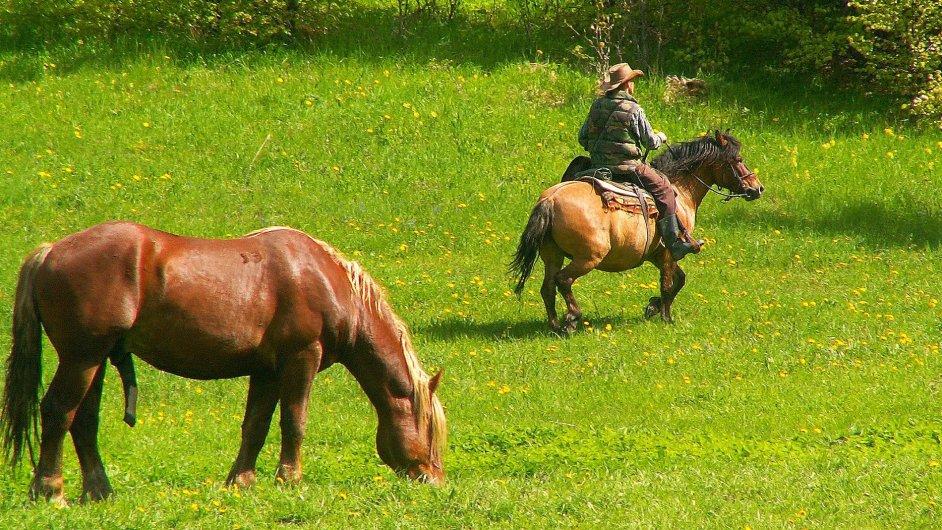 Norik muráňský je nově vyšlechtěný druh koně huculského typu