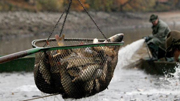 Biolog Andreska: V�ni vyloven�ho Bezdreva m�m spojenou s k�ikem volavek