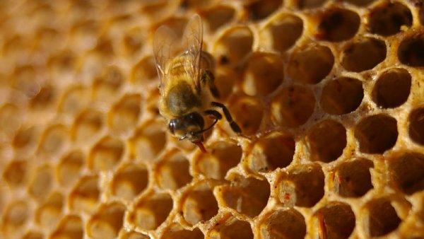 Včelpo dostalo od veterinářů za med s antibiotiky pokutu 1,2 milionu korun.
