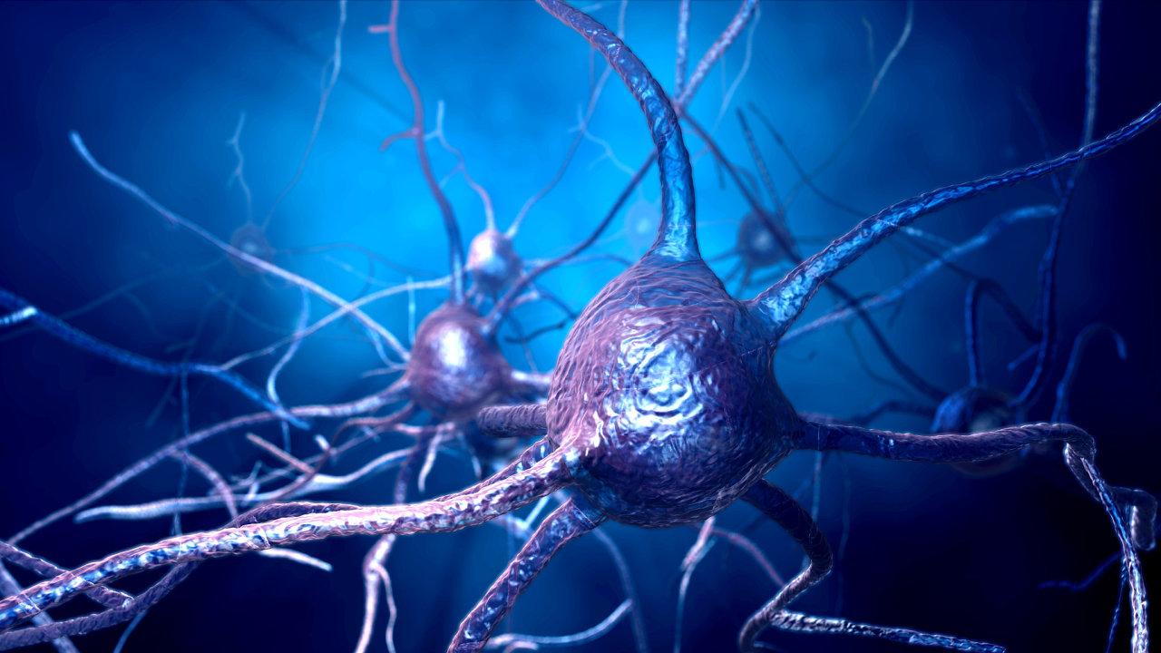 Neurony nervová soustava