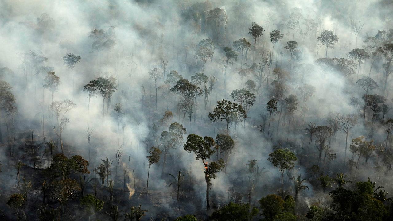 Rostoucí světová poptávka pohovězím mase způsobuje, že amazonského pralesa valem ubývá anajeho místo nastupují pole apastviny. Naobrovských planinách žijí už jen krávy.