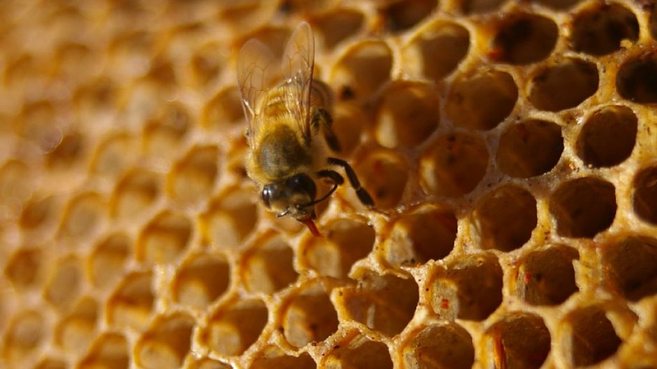 Národní divadlo má vlastní včelí úly - Ilustrační foto.