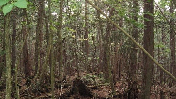 Lesy �R p�ijdou ro�n� kv�li novele z�kona o 72,5 milionu - Ilustra�n� foto.