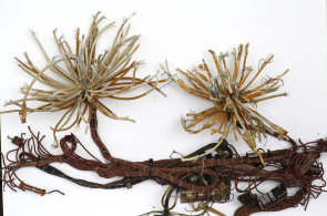Pořád žijeme v době měděné, věří výtvarník Kintera. Nové rostlinné druhy vytvořil z kabelů a drátů