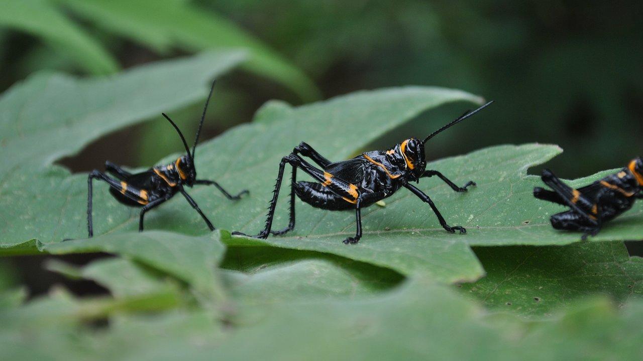 V Portoriku za posledních 35 let už zmizelo 98 procent pozemního hmyzu.