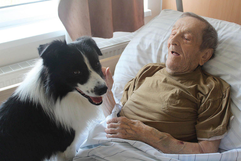 Canisterapie seniorům pomáhá přirozvíjení motorické dovednosti, rozvíjí orientaci vprostoru ačase, podporuje verbální inonverbální komunikaci, napomáhá soustředění atrénuje paměť.