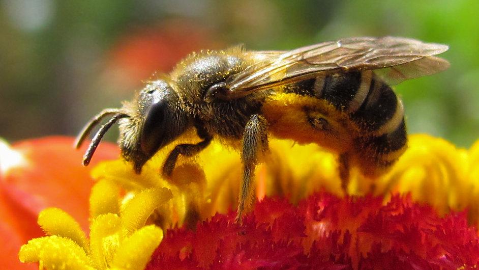 Výstava představí módu inspirovanou včelami. - Ilustrační foto