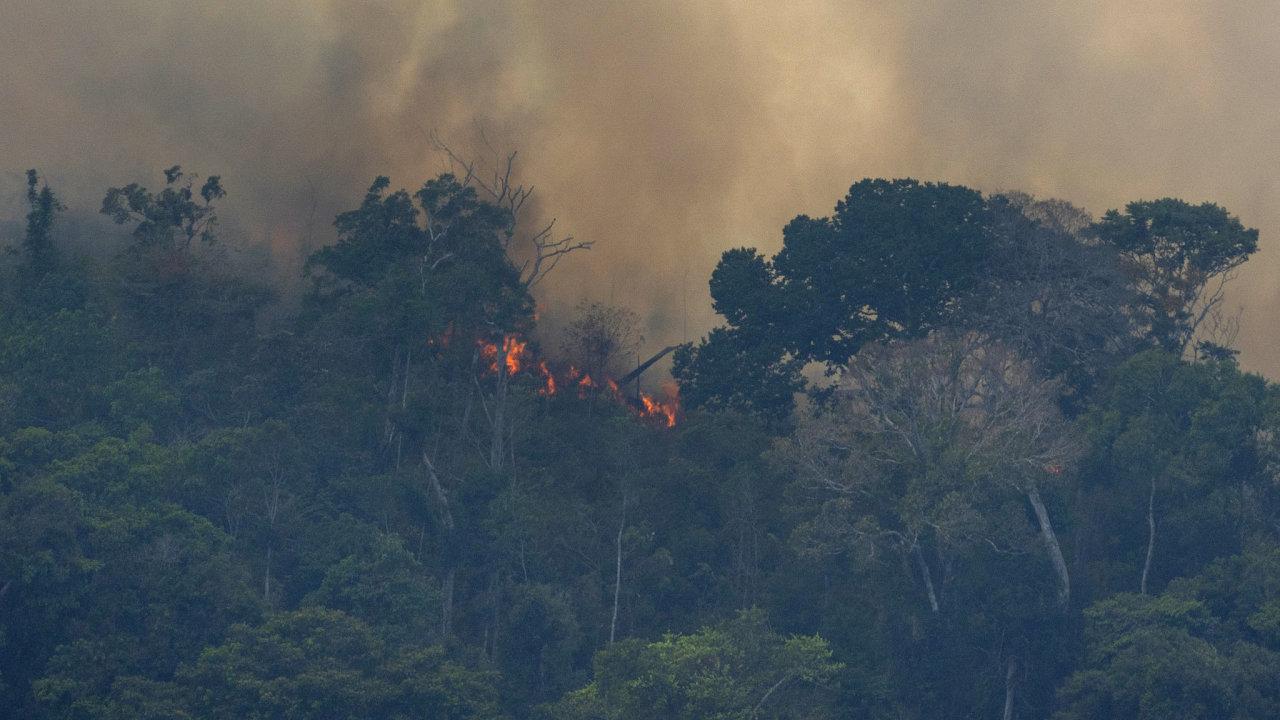 První požáry vypukly v květnu a široce se rozšířily v srpnu, podobně jako v sousední Brazílii.