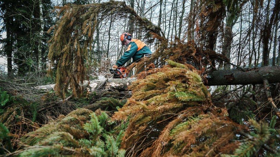 Liberec, les, těžba