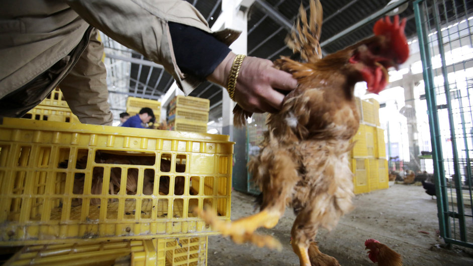 Ptačí chřipka, Čína