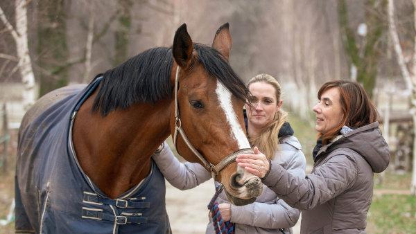 Kůň vám půjčí nohy