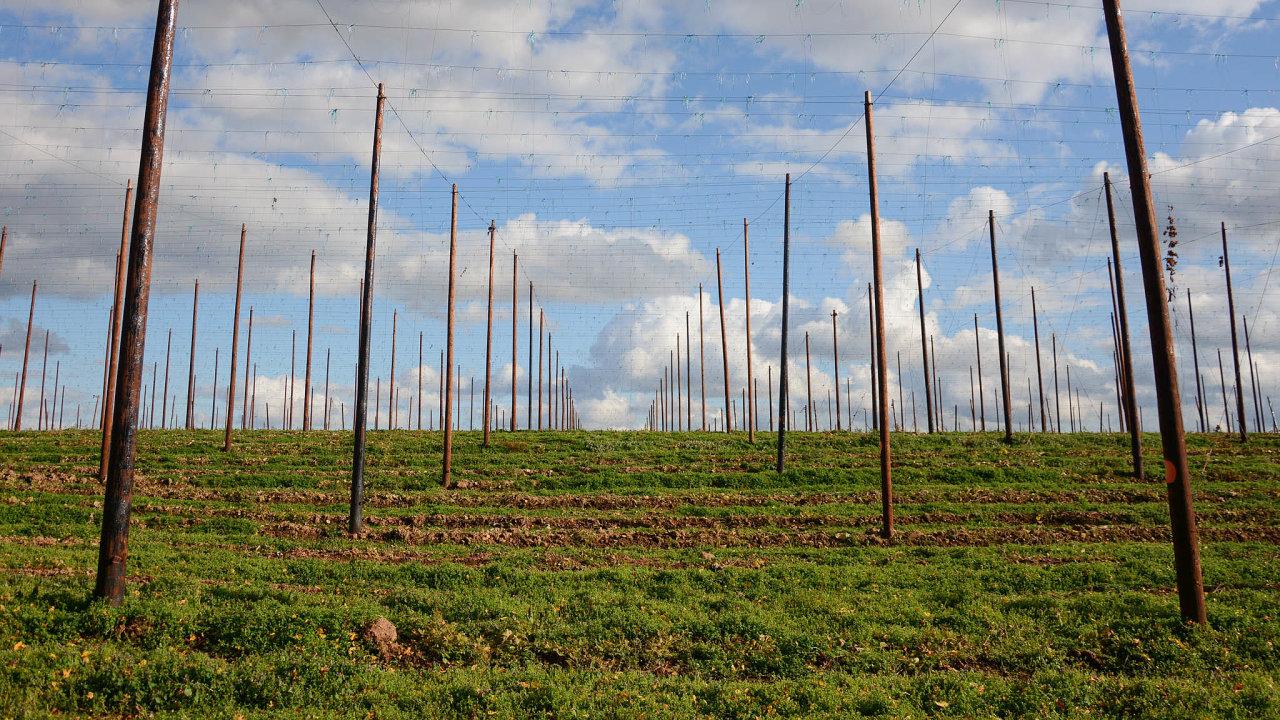 Chmel vproblémech: PoNěmecku aUSA je Česko třetím největším dodavatelem chmele.