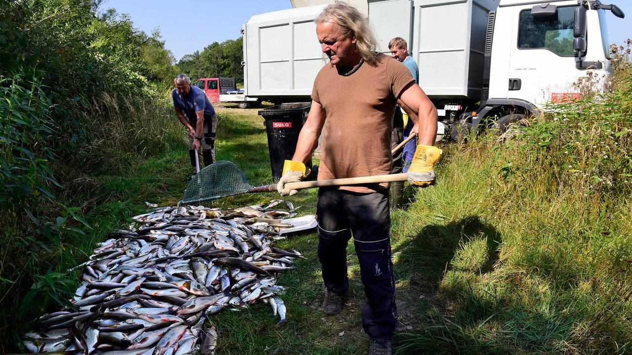 Ekologická katastrofa: 20. září kyanid nařece Bečvě otrávil desítky tun ryb. Čistička, kterou provozuje Energoaqua, vylučuje, že by jed unikl zbývalého areálu Tesly.