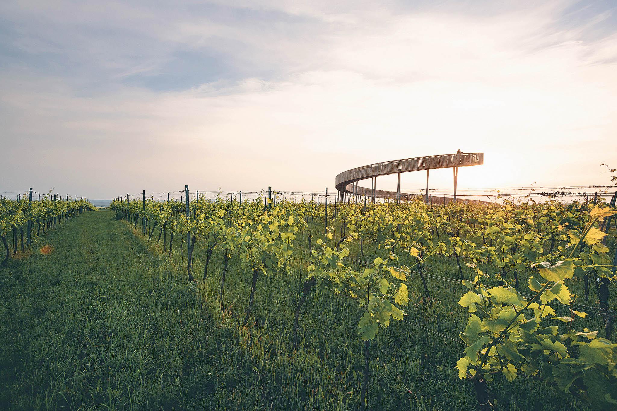 Stezka nad vinohrady