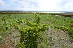 Portugalsko, korek, les, poušť, víno