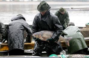 Loňská produkce ryb byla nejvyšší za posledních 5 let