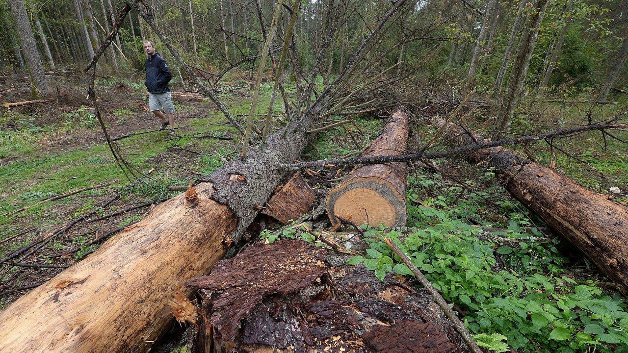 Bělověžský prales.