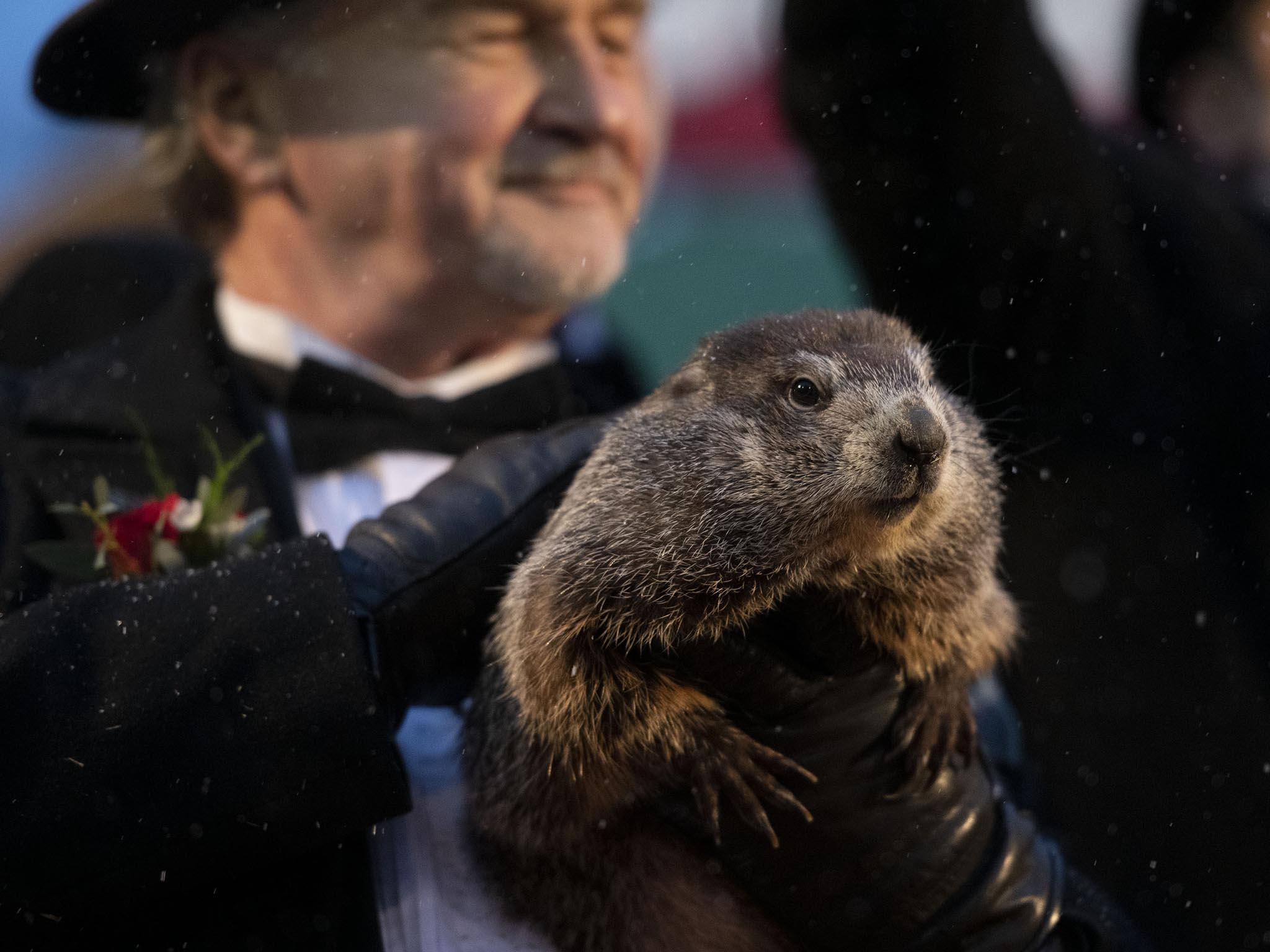 """Když slavný svišť Phil zasvítání vylezl zesvé nory, nespatřil svůj stín. """"Jaro přijde brzy, je to jisté,"""" zní podle Pensylvánské turistické kanceláře předpověď."""