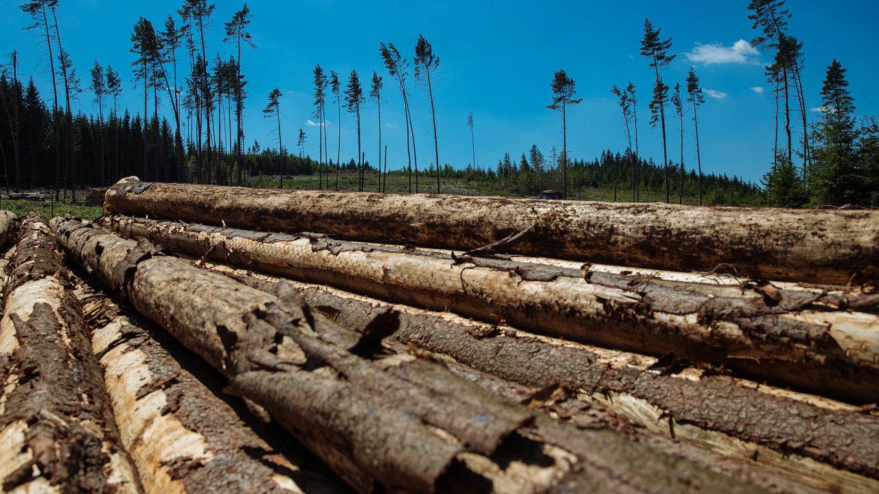 Kůrovcová kalamita: Kůrovcem je nyní mimořádně silně zasaženo či bezprostředně ohroženo 47 procent katastrálních území vČesku.