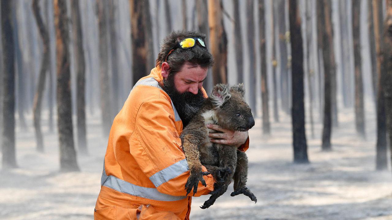 Požáry v Austrálii hubí místní přírodu, zahynul už velký počet vzácných zvířat. Lidé je nestačí zachraňovat.